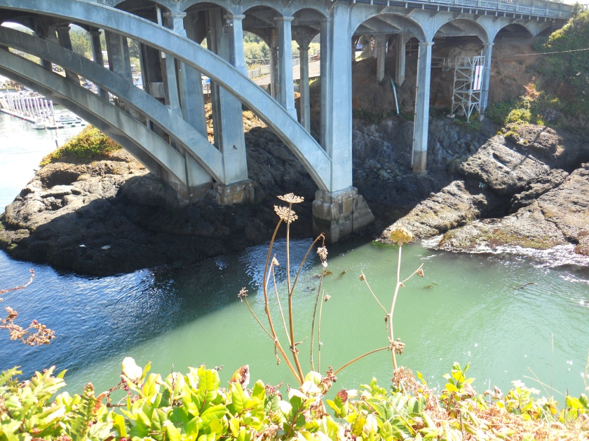 flowers at Depoe Bay Bridge (2)