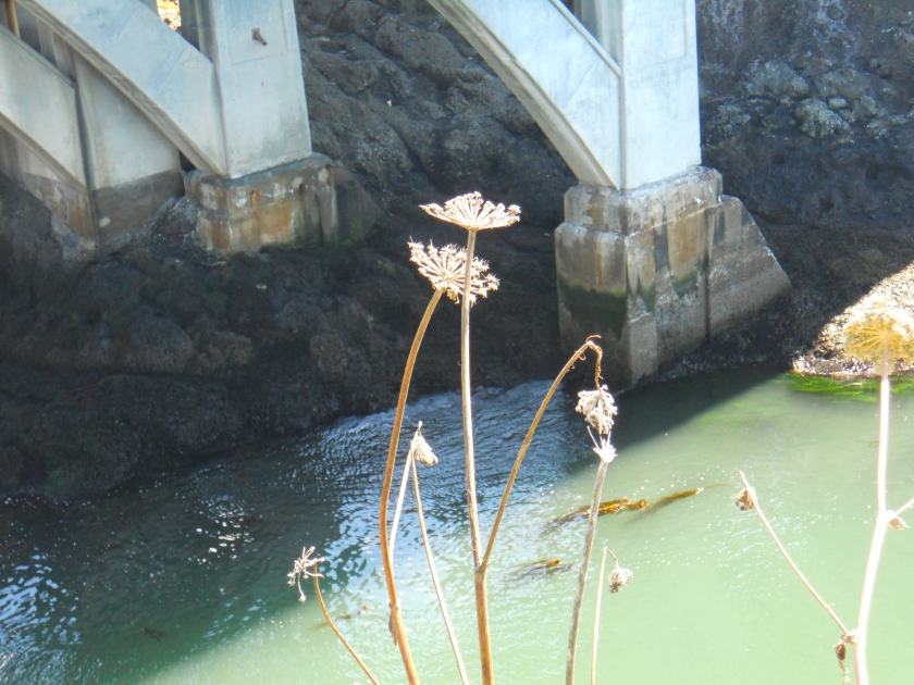 more flowers at Depoe Bay Bridge (2)
