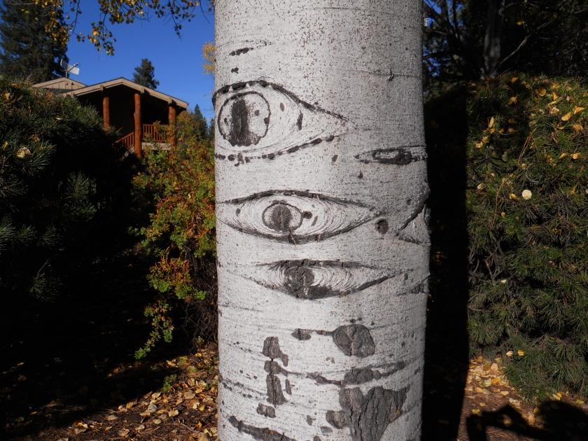 birch tree more detail