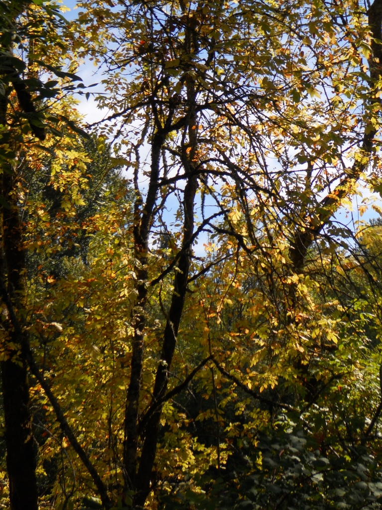 gold tree (2)