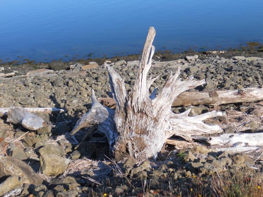 tree stump skeleton (2)