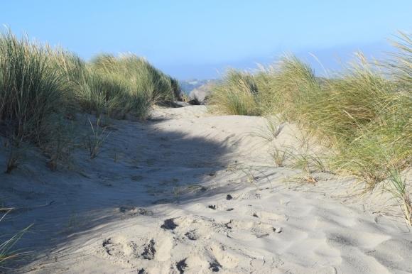 sea grasses by cliff (1024x683)
