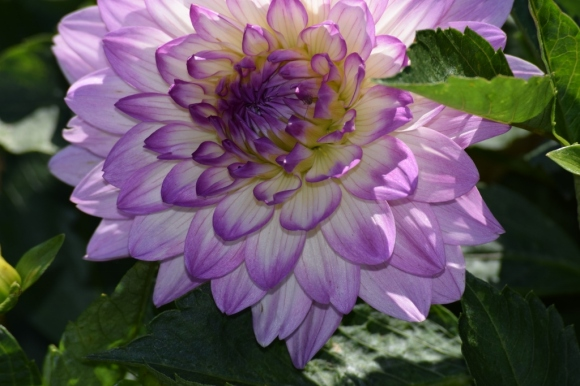 pale purple (1024x683)