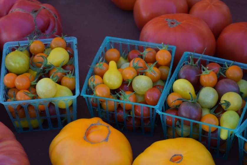 Tomatoes5 (1024x683)