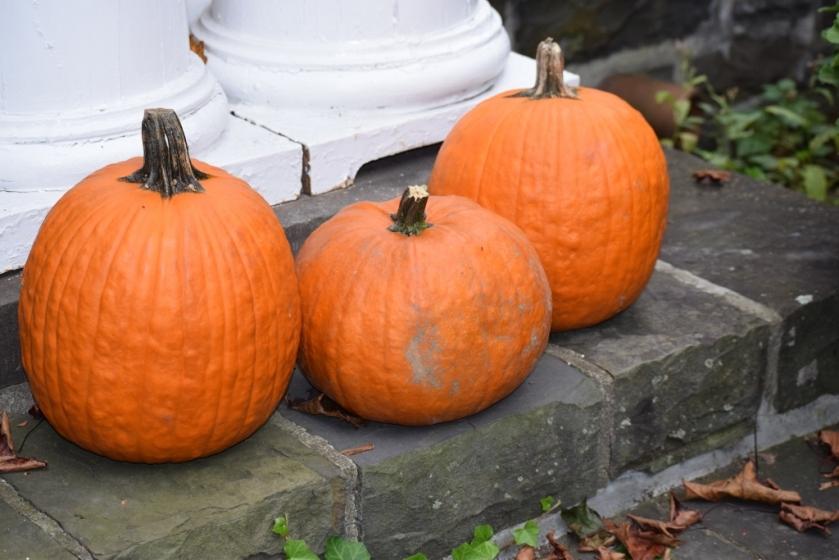 pumpkins-1024x683