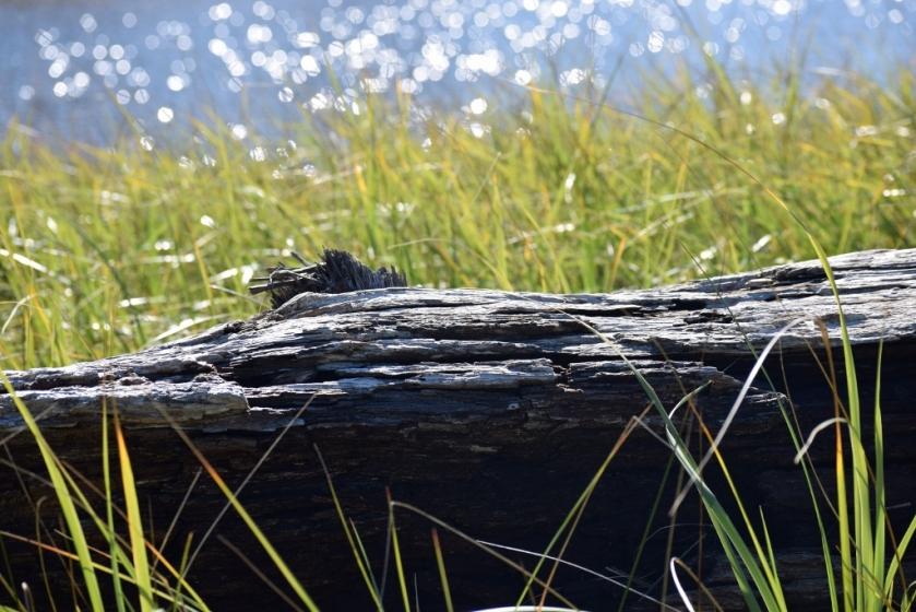 driftwood-at-cannon-beach-1024x683