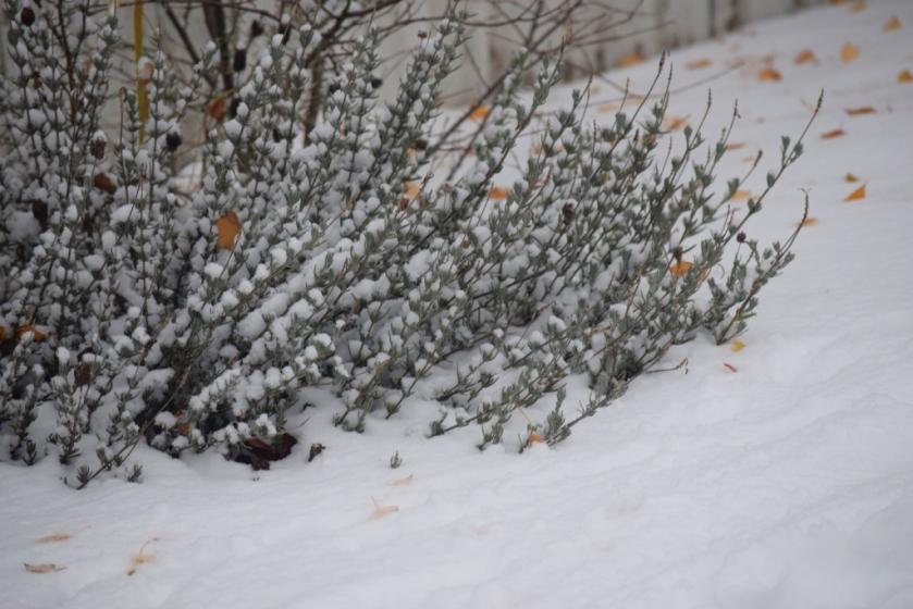 foliage-in-snow-1024x683
