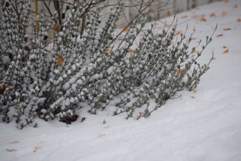 foliage-in-snow-1024x683