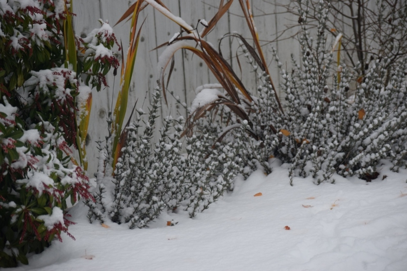 shrubbery-in-snow-1024x683