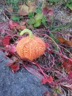 Torunn's Wee Pumpkin